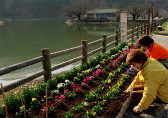 花壇に花を植える