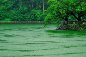 千鹿頭池大雨