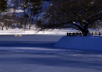 千鹿頭池冬