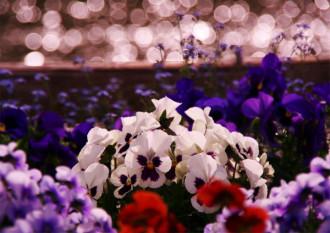 千鹿頭池の花壇