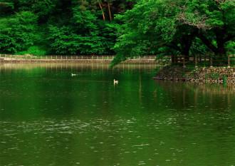 千鹿頭池初夏