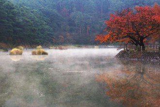 千鹿頭池の朝霧