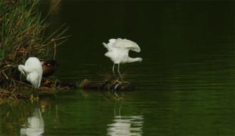 千鹿頭池でくつろぐ鳥