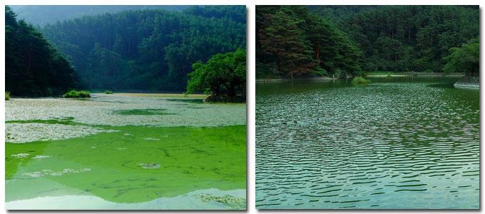 夏の千鹿頭池