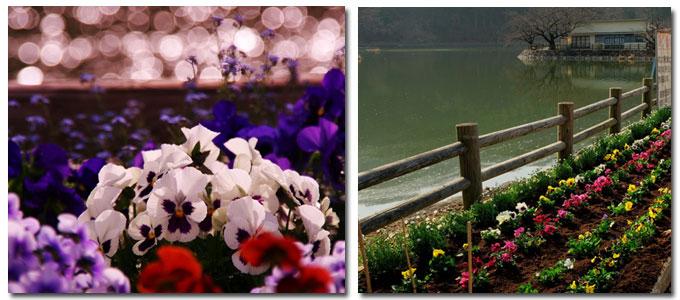 池のほとりに咲く花