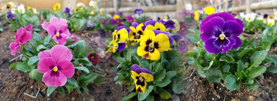 千鹿頭池畔の花々
