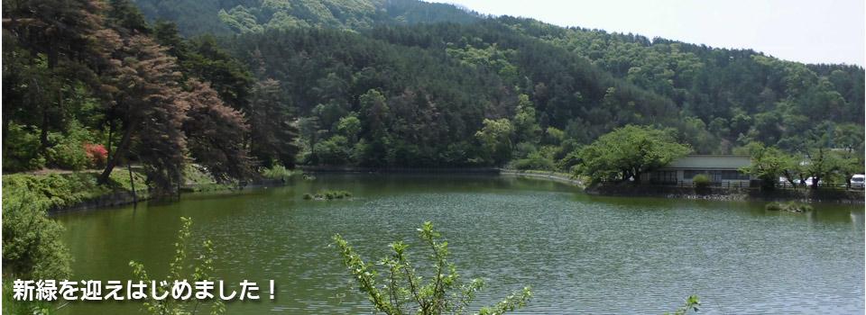 千鹿頭池の新緑