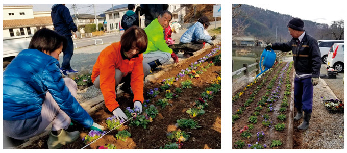 花壇の花植え作業