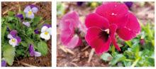 花壇に植えられた花