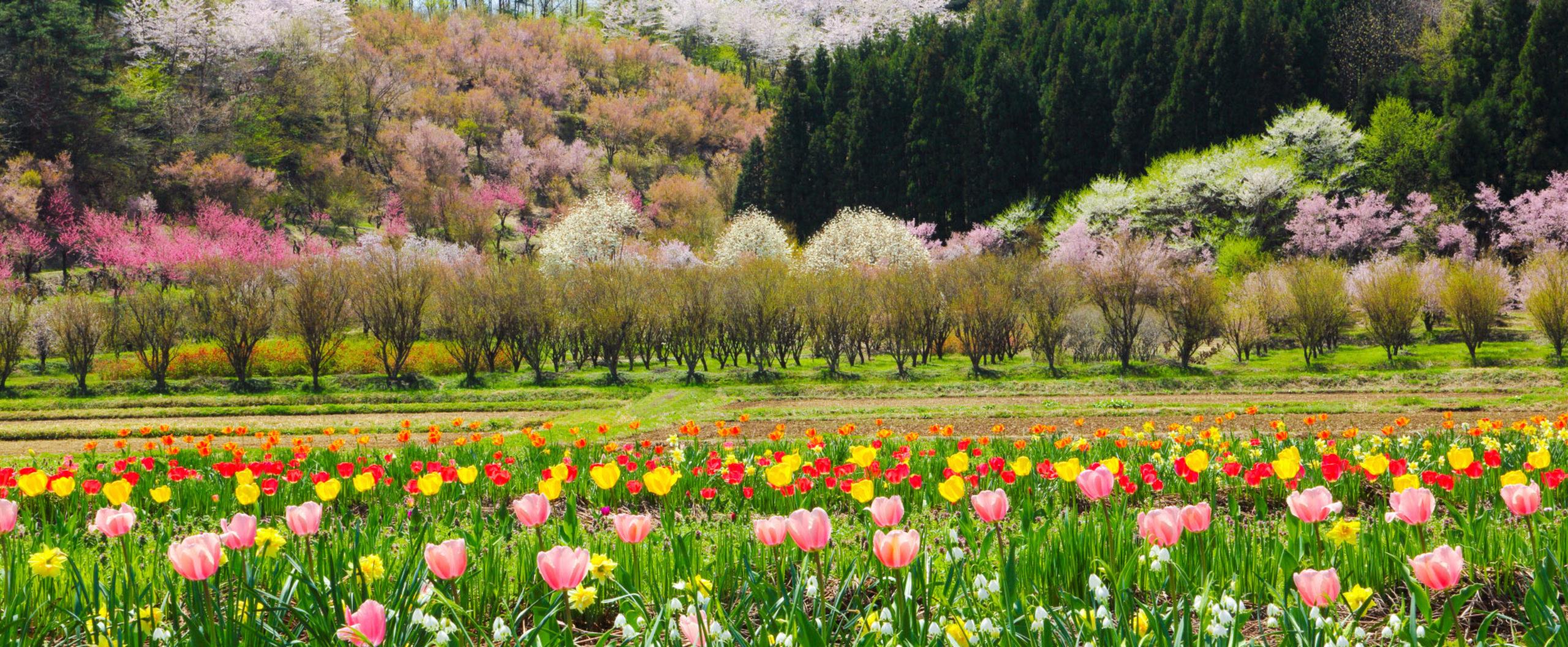 山々の緑と池や田園風景豊かな自然に恵まれた町